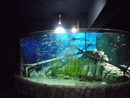 【千歳市】自然を学べる千歳水族館