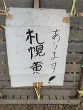 札幌黄4.jpeg